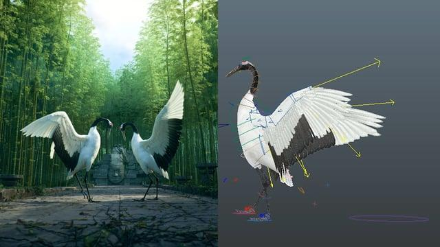Realistic 3d birds animation
