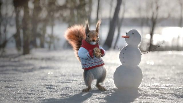 Christmass squirrels on Channel One.