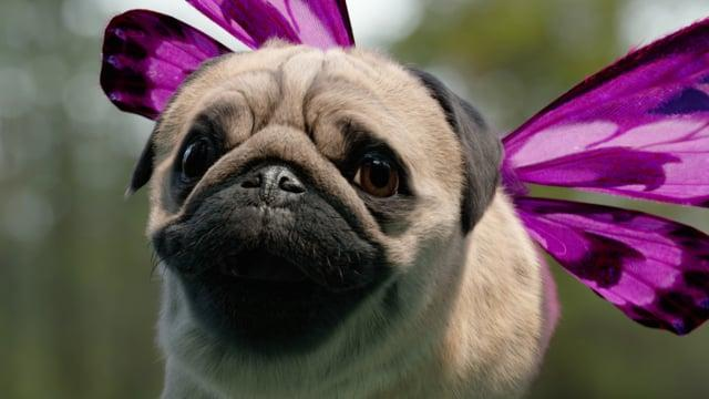 Behind The Scenes: Three 'Free Your Puggerfly'