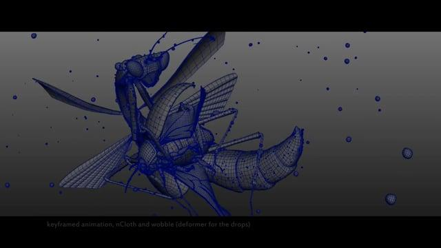 Insects - Making of